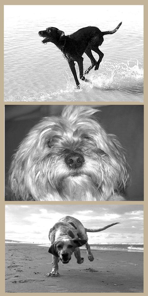 De honden van Ellen Stefels op de pagina contact